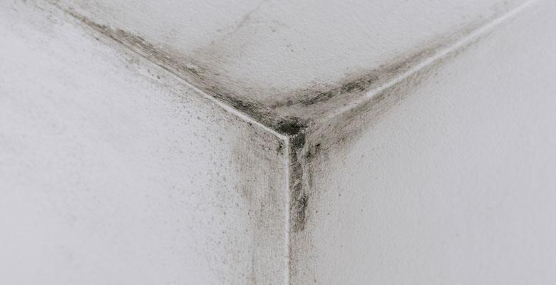 pleseň na stene