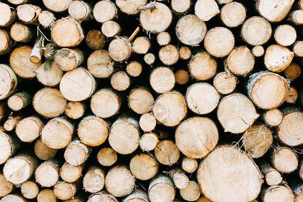 tvrdé drevo