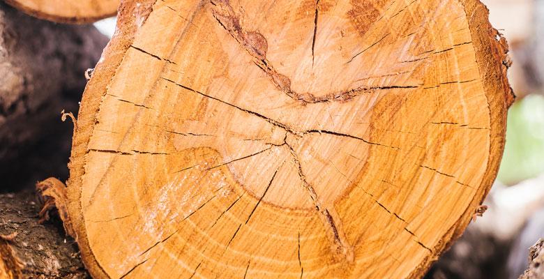 tvrdosť dreva